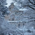 schnee-Bäume